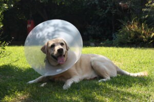 Harry Cone of Shame